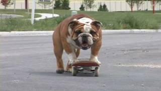 Dhtv Skateboarding Bulldog