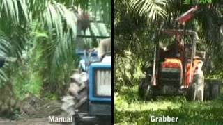 Palm Fruit : Manual Cutter vs Motorized Cutter (I)