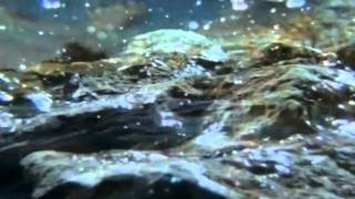 видео Значение воды в природе