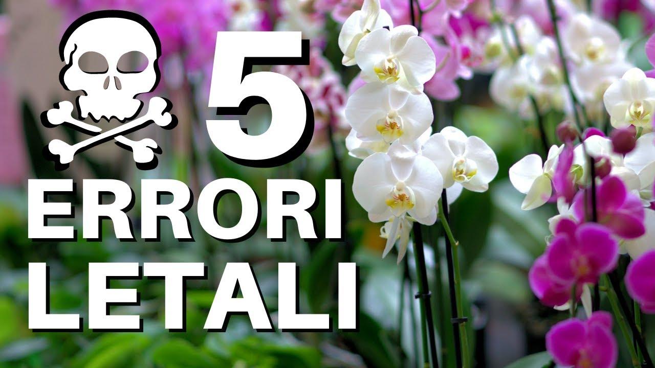 Download 5 ERRORI LETALI PER LE ORCHIDEE