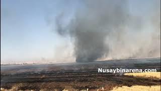 Nusaybin'de anız yangınında hortum fırtınası çıktı