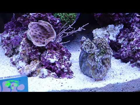 Rising tide reef tank at macna 2017 it