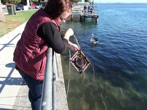 Magnet fishing the entrance australia 27 05 2017 wonderful for Fishing magnets for sale