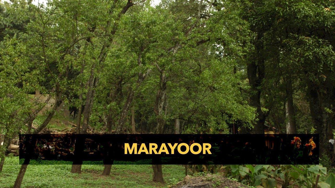 Marayoor - The land of sandalwood
