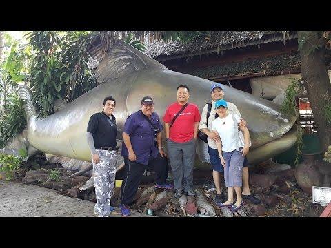 Fishing Video !!! Awesome Mekong Catfish Fishing Thailand - BKKGUY