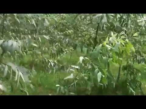 Nilgiri farming Lingda Gujarat