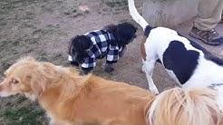 Dog Parks - Phoenix Pets