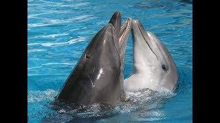 Дельфинарий Ялта Шоу Дельфины выступают Мои живые фото дельфина.) Дельфины. Yalta Dolphinarium
