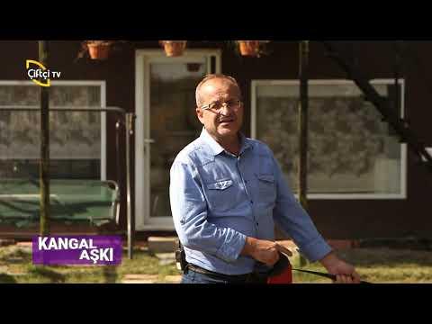 Kangal Aşkı - Dişi Kangal Köpeklerin Özellikleri