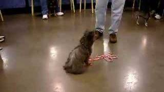 Jazzmin Sit Stay With Distraction Petsmart Puppy Training