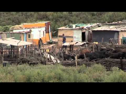 Afrique du Sud : Durban et l'énergie durable