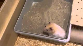 Mompfred, ein glücklicher Hamster?! / A happy Hamster?!