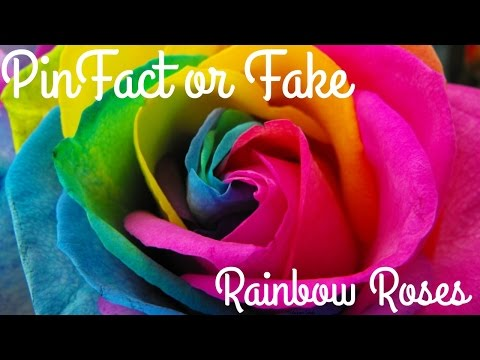 PinFact or Fake! Rainbow Roses