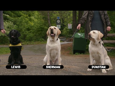Makings of a Guide Dog Documentary