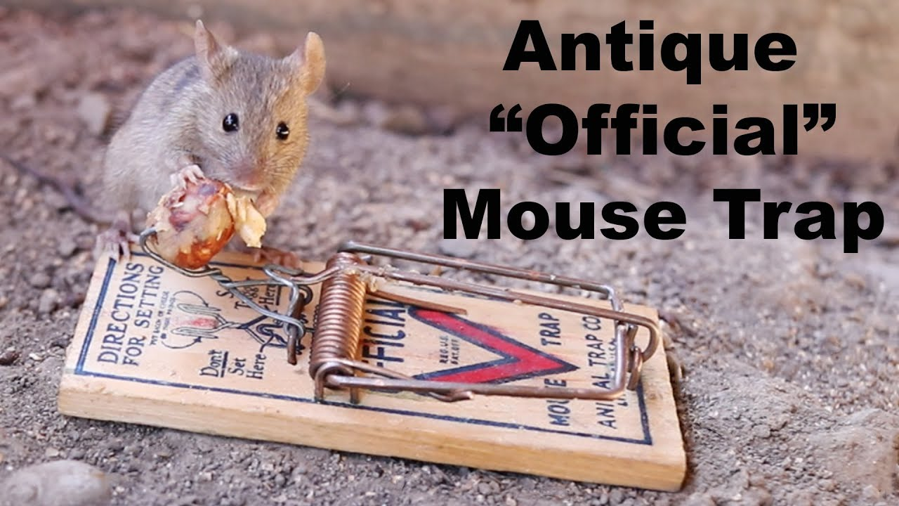 pulling-a-tooth-catching-mice-with-an-antique-official-mouse-trap-mousetrap-monday