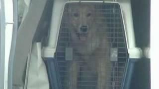犬しつけ DVD http://inusituke.ran-maru.net/ 森田流犬のしつけマニュ...