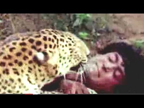 Tarzan fighting with Leopard - Jungle Love Scene - 4/11 thumbnail