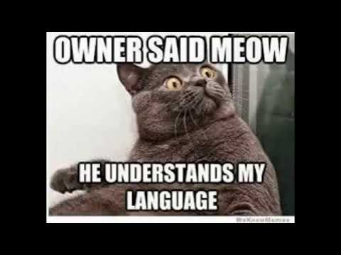 Funny Clean Memes 2015 : Funny animal memes youtube
