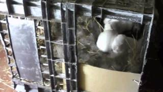 Родилка для кроликов своими руками