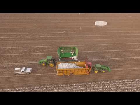 2017 texas panhandle cotton picking