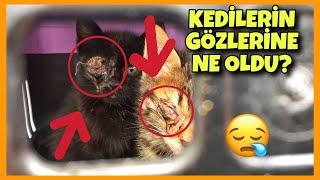 Kedİlerİn GÖzlerİne Ne Oldu ? What Happened To Cats Eyes ?