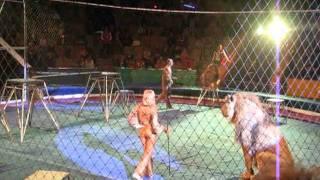 Львы напали на Дрессировщика!!! Жесть!!!!