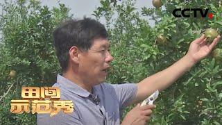 《田间示范秀》专家出手 绿色防虫必杀技 20200420   CCTV农业