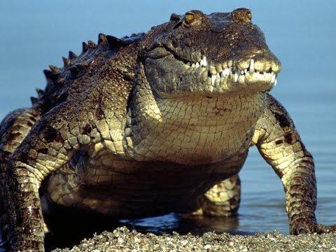 Crocodiles Of Florida : Best Documentary 2017