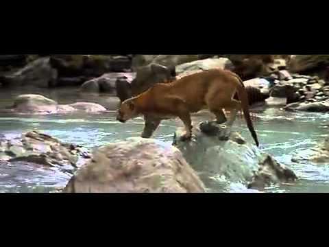 عالم الحيوان.. من اروع ما شاهدت بحياتي .. سبحان الله ..