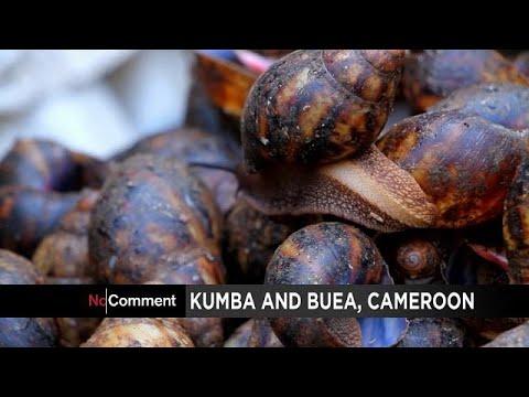 Le business florissant des escargots au Sud-Ouest du Cameroun [no comment]