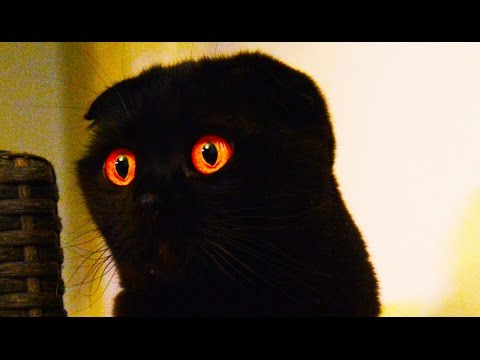 Halloween creepy cats and Kittens | Funny and Cute videos Compilation