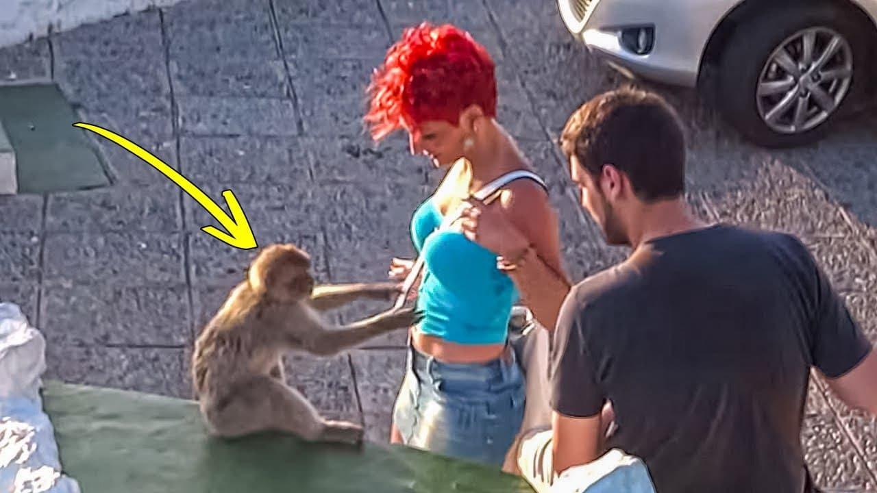 15 geniale Affen vor der Kamera gefilmt