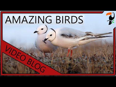 Amazing Birds Of The World (2020 Edition)