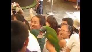 Далянь  Парк птиц  Шоу попугаев(, 2015-06-11T22:22:20.000Z)