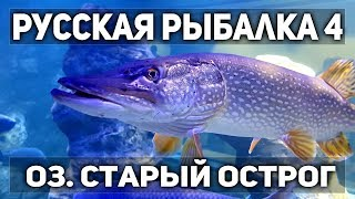 Російська рибалка 4.В 19,00 мск тур на ляща р. Волхов!!!1місце - фідер Palmar FD150 (13кг)
