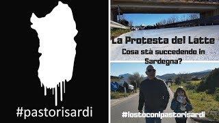 La protesta del latte!  Cosa stà succedendo in Sardegna?  #iostòconipastorisardi