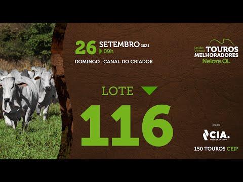 LOTE 116 - LEILÃO VIRTUAL DE TOUROS 2021 NELORE OL - CEIP