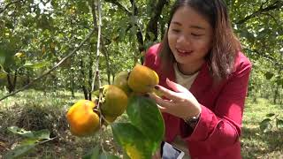 Khám phá VƯỜN HỒNG chín mọng trên đèo Mimosa Đà Lạt