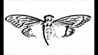 Cicada 3301: REVERSED Interconnectedness