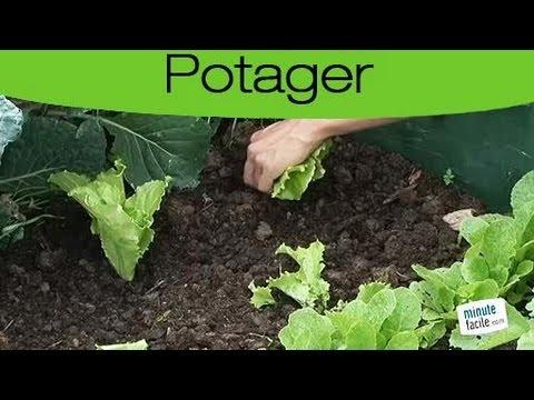 jardinage planter de la salade youtube. Black Bedroom Furniture Sets. Home Design Ideas