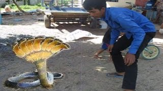 Brave Boys Catch Village Snake by Hand - How To Catch Biggest Snake In My Village