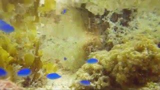 石垣島の熱帯魚 BGV利用フリー
