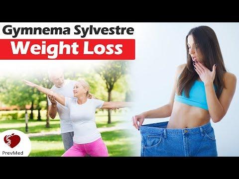 gymnema-sylvestre:-sugar-destroyer-&-sweetness-blocker?-(part-2)