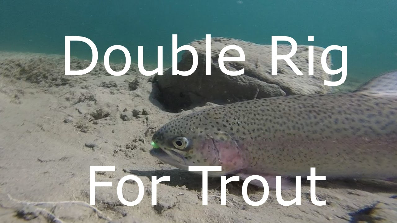 double rig for trout fishing - youtube, Fly Fishing Bait