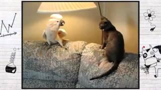 О чем думают животные Смотреть всем