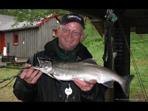 Fluefiske i Laggo elva - Finnmark