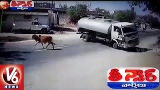 Caught On Cam | Cow Miracle Escape From Accident In Gujarat | Teenmaar News | V6 News