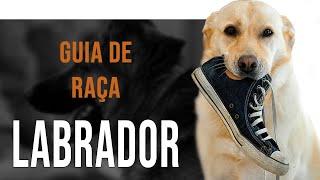 LABRADOR RETRIEVER  All about the breed