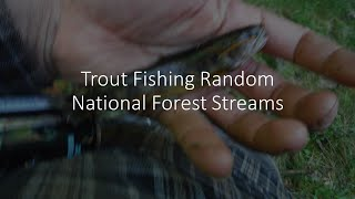Trout Fishing Random National Forest Creeks