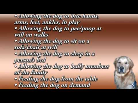 CHICAGO DOG TRAINER: WHAT ARE DOGS MADE OF????